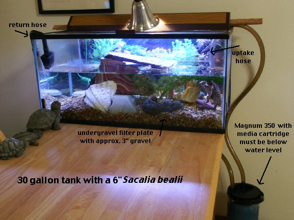 One Effective Setup For Aquatic Turtles In Small Tanks